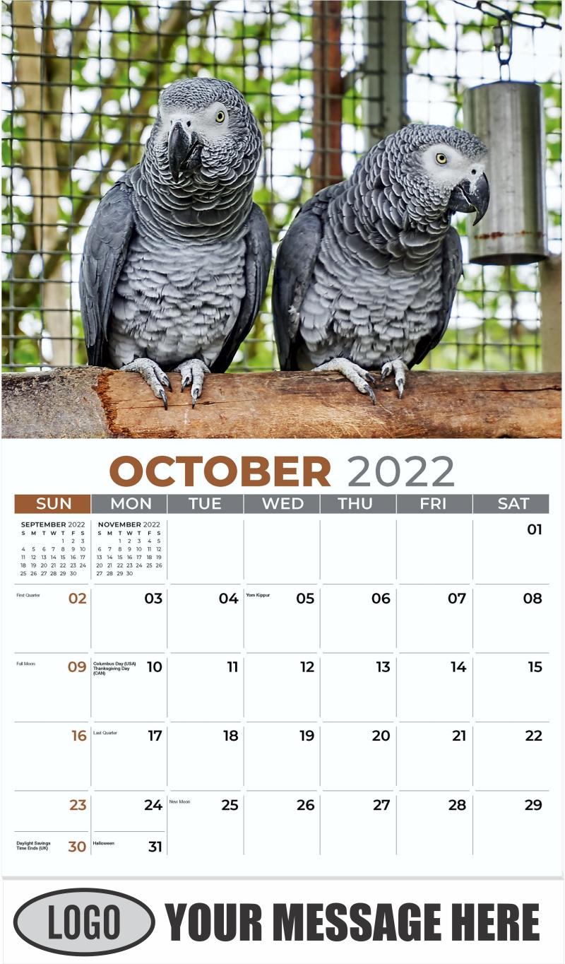 African Grey Parrots - October - Pets 2022 Promotional Calendar
