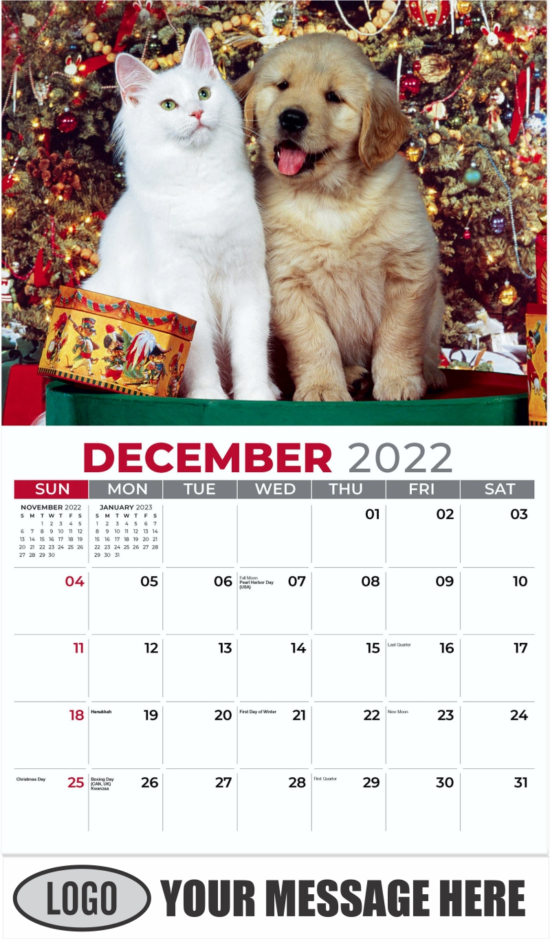 Golden Retriever Puppy And White Maine Coon Cat - December 2022 - Pets 2022 Promotional Calendar