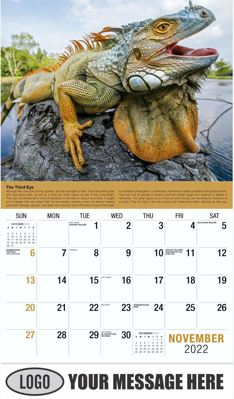 2022 Planet Earth Calendar - November - Planet Earth 2022 Promotional Calendar