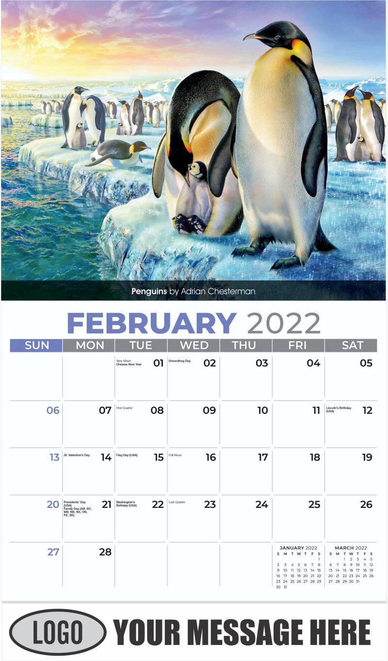Penguins by Adrian Chesterman - February - Wildlife Portraits 2022 Promotional Calendar